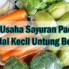 Cara Usaha Sayuran Packing